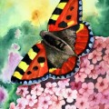 Toitoseshell Butterfly 2