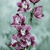 Orchid Cymbidium-Strathavon