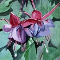 Fuchsia Tutone