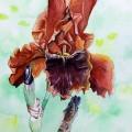 Iris Copatonic