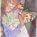 Painted Lady On Budlea