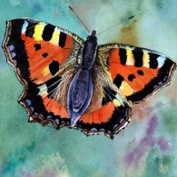 Tortoiseshell Butterfly (1)